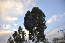 وزش باد نسبتا شدید در جنوب و غرب استان تهران پیشبینی میشود