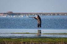 طرح ممنوعیت شکار پرندگان مهاجر در مازندران از حرف تا عمل