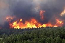 امسال 53 هکتار از جنگلها و مراتع گچساران در آتش سوخت