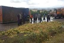 20 راس احشام در حادثه رانندگی در مشگین شهر تلف شدند