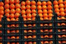 کشف پرتقال قاچاق درمشهد