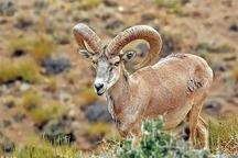 چهار شکارچی غیرمجاز در تربت جام دستگیر شدند