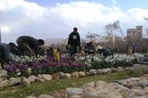 گلکاری پاییزه در 20 هزارمترمربع فضای سبز سمنان انجام شد
