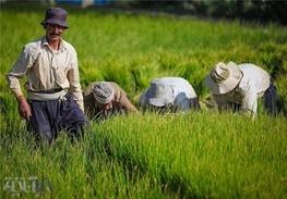 ۲۰ درصد افزایش مصرف سوخت در بخش کشاورزی