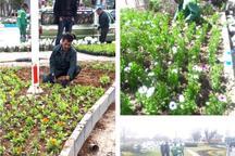 بیش از چهار میلیون نشاء گل در شهر همدان کاشته شد
