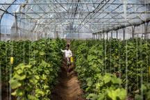 توسعه گلخانه ها مکمل تفکر افزایش بهره وری است