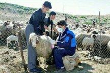 یک میلیون و 521 هزار راس دام در کردستان مایه کوبی شد