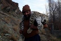 مرگ مشکوک یک قلاده پلنگ درمازندران