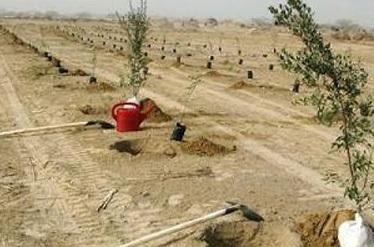 بسیجیان همدان 6 هزار اصله نهال در خوزستان کاشتند