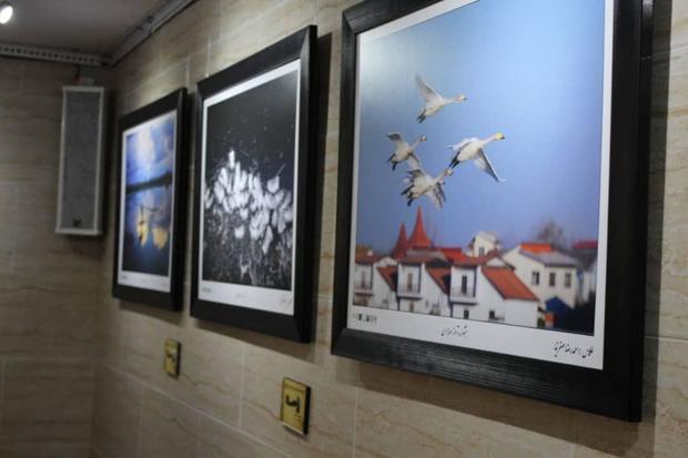 نمایشگاه عکس آواز مهاجران در فریدونکنار افتتاح شد