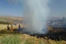 وقوع آتش سوزی مجدد؛ یک هکتار از باغ های شهرستان بن در آتش سوخت