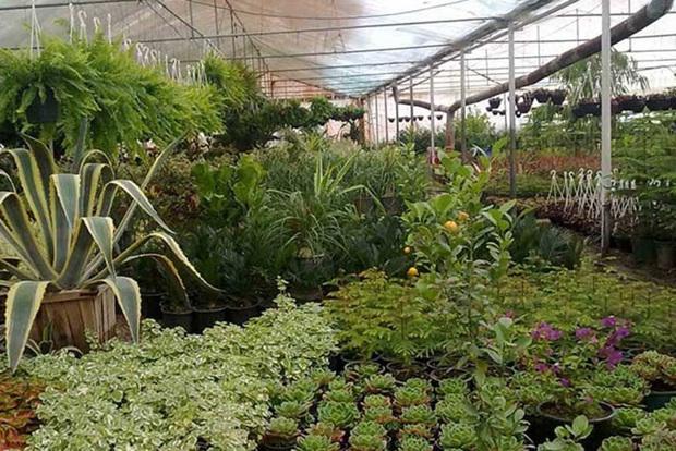 هفت طرح کشاورزی در محلات آماده بهره برداری است