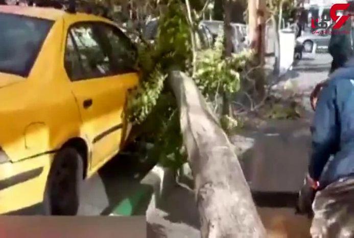 طوفان در خیابان نجاتاللهی خسارت به بار آورد + فیلم