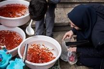 مراکز عرضه ماهی قرمز از دامپزشکی مجوز کسب کنند