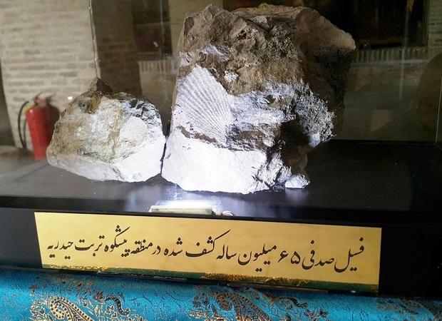 فسیل های 65 میلیون ساله در تربت حیدریه رونمایی شدند