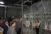 کشتارگاه صنعتی مرغ ماد سقز بعد ازسالها تعطیلی دوباره آغاز به کار کرد