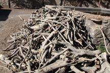 کشف بیش از 7 تن چوب قاچاق در استان تهران