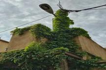 تیر برق سبز! + عکس