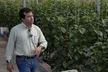 بازدید کارشناسان اسپانیایی از گلخانه های هرمزگان