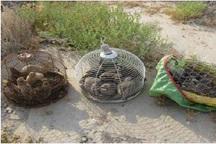 30 قطعه کبک و تیهو در تنگستان کشف شد