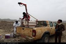 110هکتار از دشت های حاجی آباد سمپاشی شد