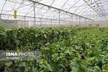 راهاندازی مجتمع گلخانهای 1500 هکتاری در پارسآباد 380 طرح راکد را فعال میکنیم