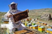 تولید عسل در مهاباد ۲.۵ برابر شد
