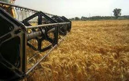 آغاز برداشت گندم از مزرعه های آران وبیدگل