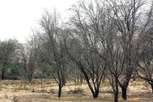 کاهش بارندگی در یزد