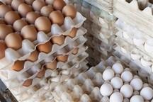 عرضه تخم مرغ با هدف کنترل قیمت در زاهدان آغاز شد