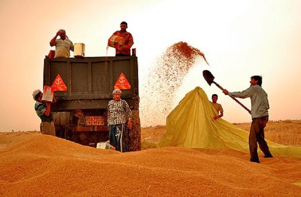 فرماندار اندیمشک:قاچاق گندم برخورد قانونی به دنبال دارد