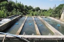 9 طرح پرورش ماهی در کهگیلویه و بویراحمد احداث شد