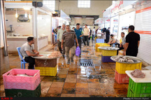 گزارش تصویری بازار ماهیفروشان آبادان