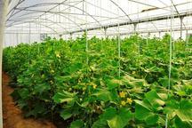 سالانه 9610 تن محصولات گلخانه ای در رودان تولید می شود