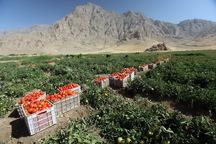 کشاورزی محور توسعه استان کرمانشاه است