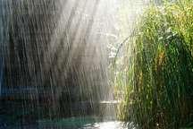 باران غبار زاگرس را شست