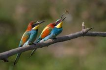 سرما ، کوچ پرندگان بهاری را به مازندران به تاخیر انداخت