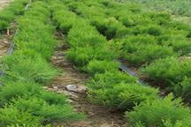 تولید 1 5 میلیون اصله نهال عرصه های منابع طبیعی در گلستان