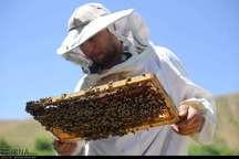 استقبال زنبورداران خراسان شمالی از بیمه اجتماعی کمرنگ است