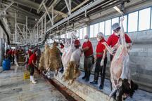 پنج هزار رأس گوسفند زنده وارداتی در یزد کشتار می شود