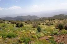 سرنوشتی تلخ در انتظار گیاهان کوهی