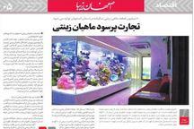تجارت پرسود ماهیان زینتی