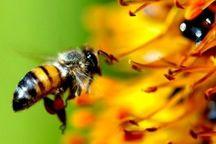 60 کندوی زنبور عسل رایگان بین کشاورزان توزیع شد