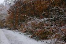 برف پاییزی درطالقان بر زمین نشست
