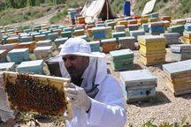 تولید عسل در چهارمحال و بختیاری دو برابر شد
