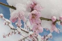 سرمای بهاره 949 میلیارد ریال به شیروان خسارت زد