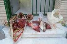 شکارچیان غیر مجاز قوچ وحشی دراسفرین دستگیر شدند