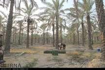 حفرچاه کشاورزی درمحله گلستان اهرم ضروری است
