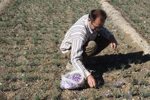 86 میلیارد ریال تسهیلات اشتغال در بخش کشاورزی خمین جذب شد