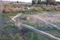 صیاد غیرمجاز پرندگان زینتی در شهرستان کوثر دستگیر شد